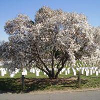 Arlington Cemetery, Арлингтон