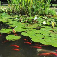 Tiny pond, Арлингтон