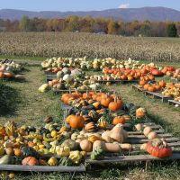 Layman Family Farm - Montvale, VA, Блу-Ридж