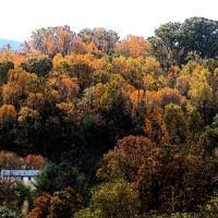 Fall Foliage, Кейв-Спринг