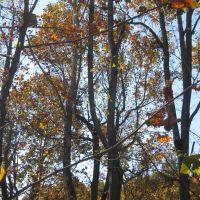 Woods, Кейв-Спринг