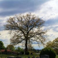 Tree at Westview Cemetery, Radford VA, Радфорд