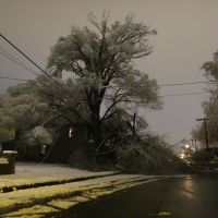 Tree Down on Wise Ave, Роанок