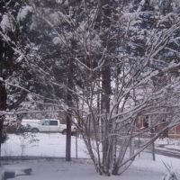 South Central Snow 2009, Саут-Бостон