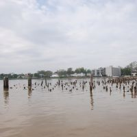 Old wharf pilings in the Rappahannock River at Tappahannock Virginia, Таппаханнок