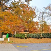 VIRGINIA: CITY OF CHESAPEAKE: Prince of Peace Catholic Church, 621 Cedar Road Christmas trees for sale, Чесапик