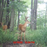 Trail Camera On Oak Ridge, Ваусау