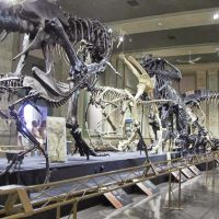 Dinosaur Discovery Museum, GLCT, Кеноша