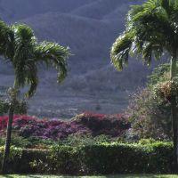 Plantation 26.11.07, Ваикапу