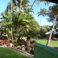 2011.0317 Maui Tropical Plantation 果樹園:南国植物の集大成, Ваикапу
