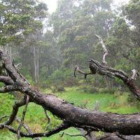 Hakalau Forest, Ваилуку