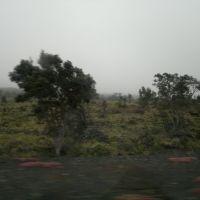 the last trees, Ваилуку