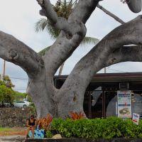 Kona Hawaï, Каилуа