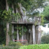 Banyan Treehouse, Капаау