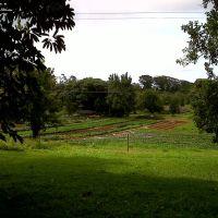 Gardens below Kalahikiola Church, Капаау