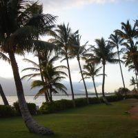 Palms on the Kihei Coast, Кихей