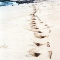 paia maui - surfer tracks, Паия