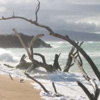 Maui Beach 2005, Паия
