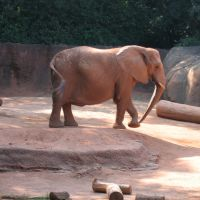 Zoo Atlanta elephant, Атланта