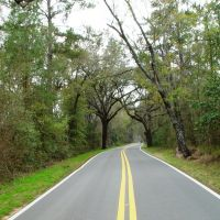 Canopy road, Old Micoosukee road, near Peck, Leon County Fla (3-15-2008), Аттапулгус