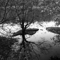 Natures Mirror, Белведер Парк