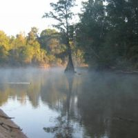 Ocmulgee Cypress in the Morning Mist, Варнер-Робинс