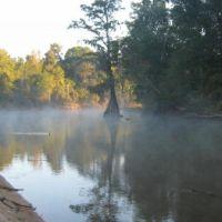 Ocmulgee Cypress in the Morning Mist, Вернонбург