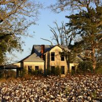 Way down south in the land of cotton . . ., Вилмингтон-Айленд