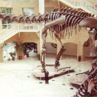 Mi viejo debajo del Argentinosaurus, Грешам Парк