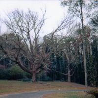 Haunted Tree, Atlanta GA, Ист-Пойнт