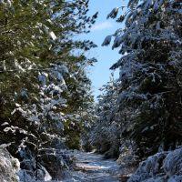 Transforming the familiar ( . . .  a not so ordinary Georgia snow.), Норт Друид Хиллс