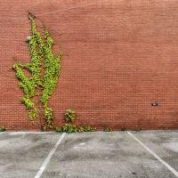 Growth, Россвилл