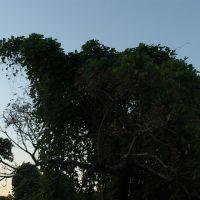 Kudzuasaurus, Томасвилл
