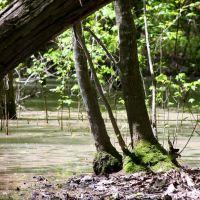 Hidden swamp, Форт Оглеторп