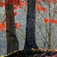 November Oak (i), Франклин