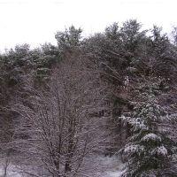 Winter, Бакханнон