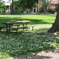 Catalpa Blossoms w/Squirrel, Хунтингтон