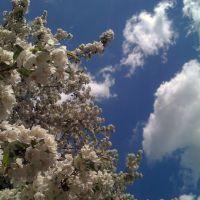 Stonegate Spring, Арлингтон