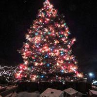 Tall Christmas Tree, Арлингтон-Хейгтс