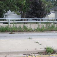 Overgrown sidewalk, Вилла-Парк