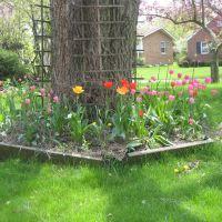 Garden, Даунерс-Гров