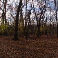 trees, Елмвуд Парк