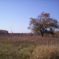 Savanna at North Creek Meadow Forest Preserve, Лансинг