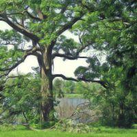 Dyer Tree, Линвуд