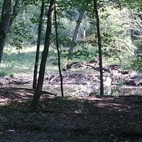 forest shot, Мортон Гров