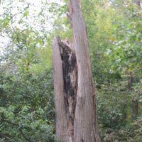 Forest Preserve in Morton Grove, Il, Broken Tree becomes Playground for 2 squirrels  (Top Left!), Мортон Гров