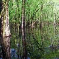 Flooded Forest Panoramio, Нортбрук
