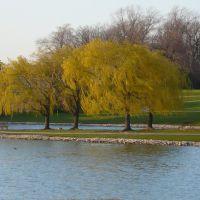 tree on lake, Парк-Сити