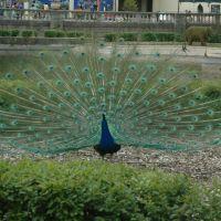 Brookfield Zoo - near the Formal Pool, Риверсид