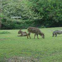 Brookfield Zoo - Habitat Africa, Риверсид